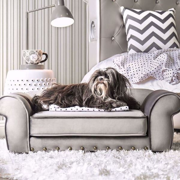 Furniture of America - Carey Pet Sofa